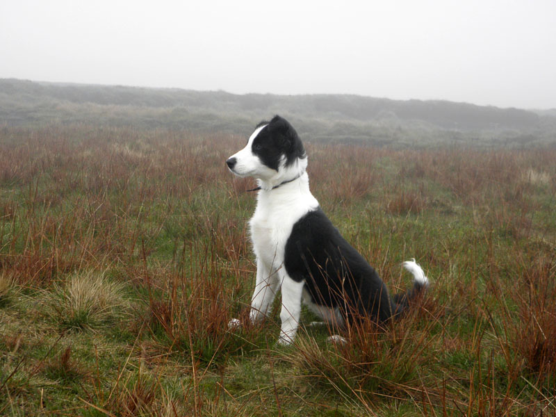 Molly on Pendle