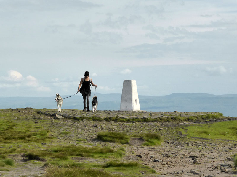 Pendle dog walker
