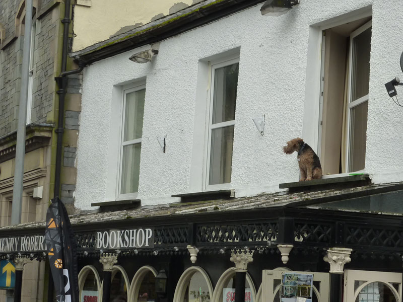 Dog on shop