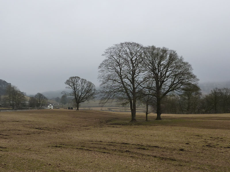 Trees near Settle
