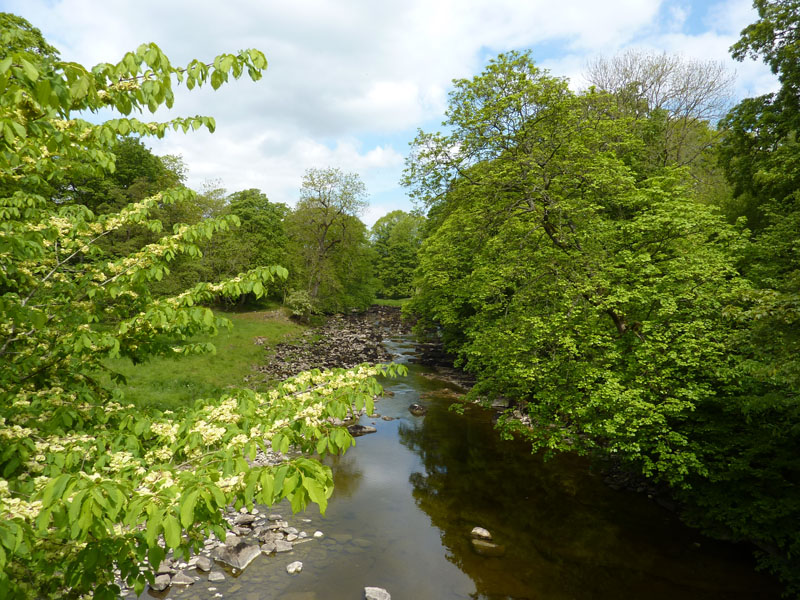 Ribble at Stainforth